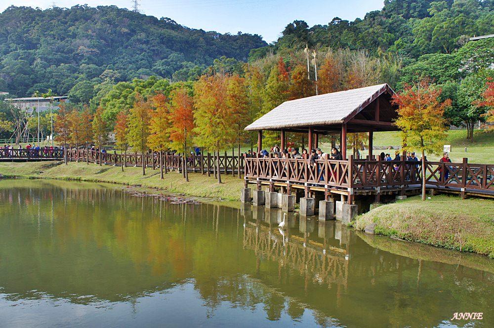 ║台北士林原住民文化主題公園║市區裡的落羽松秘境 鄰近台北故宮