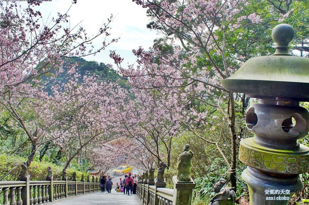 [台北內湖] 碧山巖春日櫻花綻放  粉紅階梯約你浪漫這一季