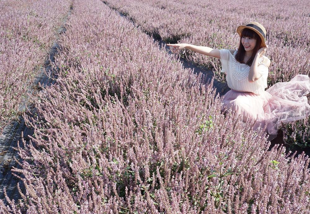 20181203234407 99 - [桃園花彩節]紫色仙草花田夢幻登場  一起拍出日雜感照片