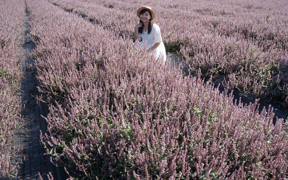 20181203234420 28 - [桃園花彩節]紫色仙草花田夢幻登場  一起拍出日雜感照片