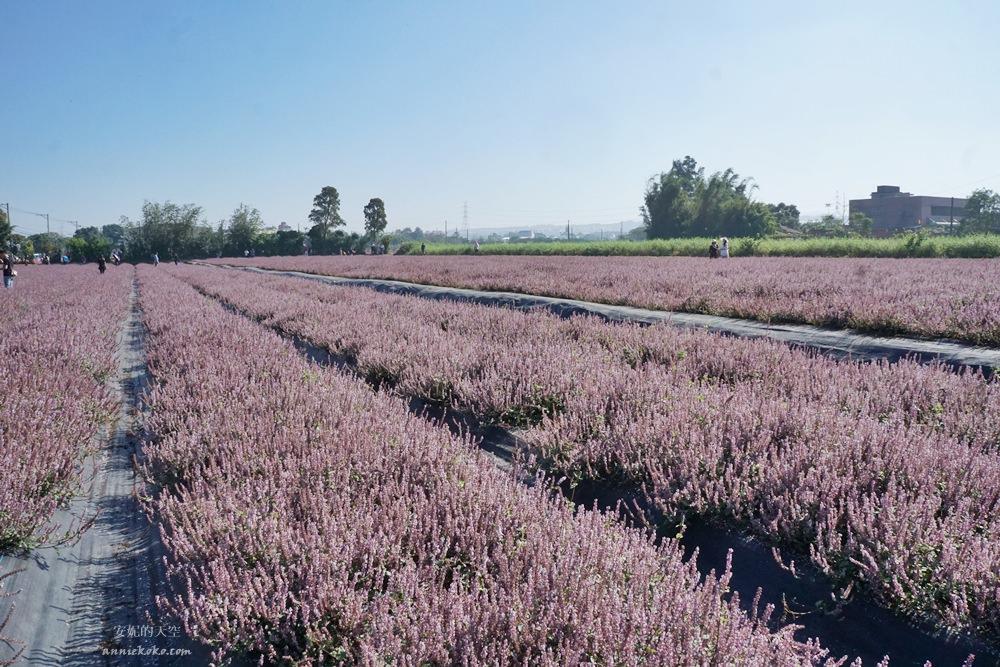 20181203234428 13 - [桃園花彩節]紫色仙草花田夢幻登場  一起拍出日雜感照片