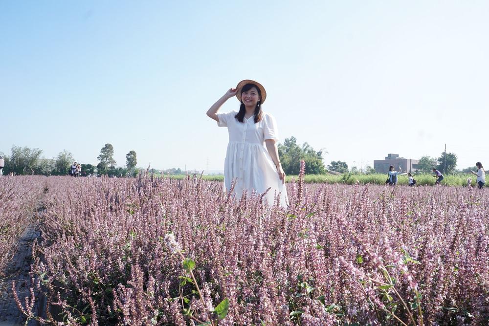 20181203234456 20 - [桃園花彩節]紫色仙草花田夢幻登場  一起拍出日雜感照片