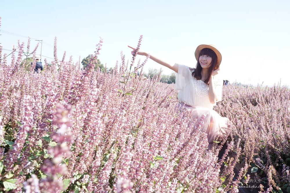 20181203234515 37 - [桃園花彩節]紫色仙草花田夢幻登場  一起拍出日雜感照片