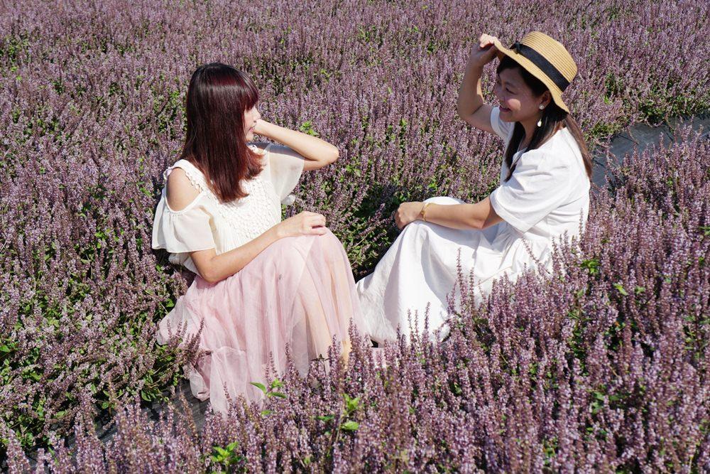 20181203234521 80 - [桃園花彩節]紫色仙草花田夢幻登場  一起拍出日雜感照片