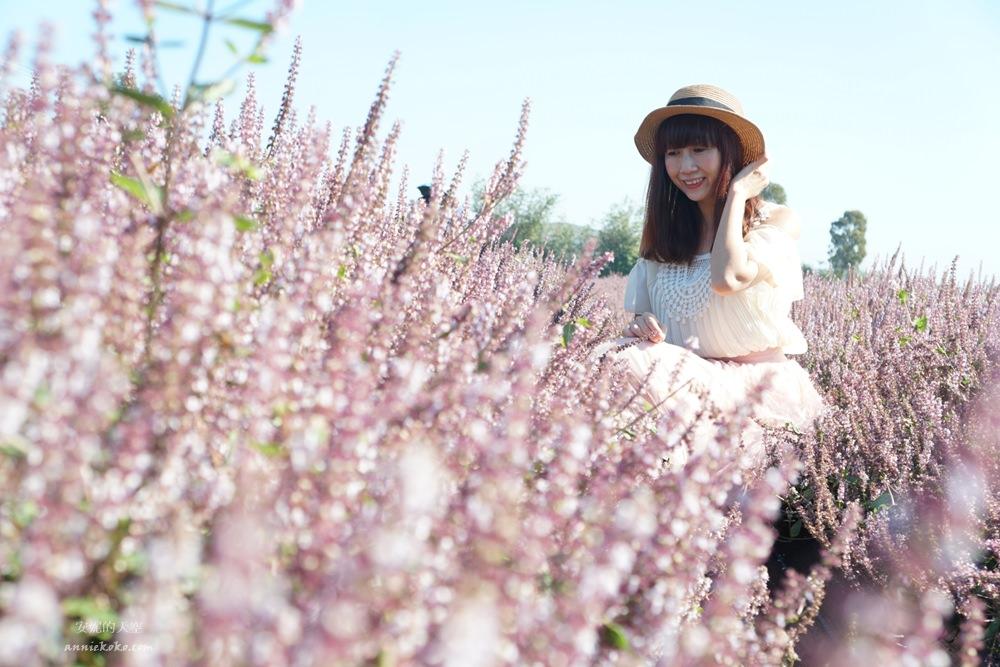 20181203234623 89 - [桃園花彩節]紫色仙草花田夢幻登場  一起拍出日雜感照片