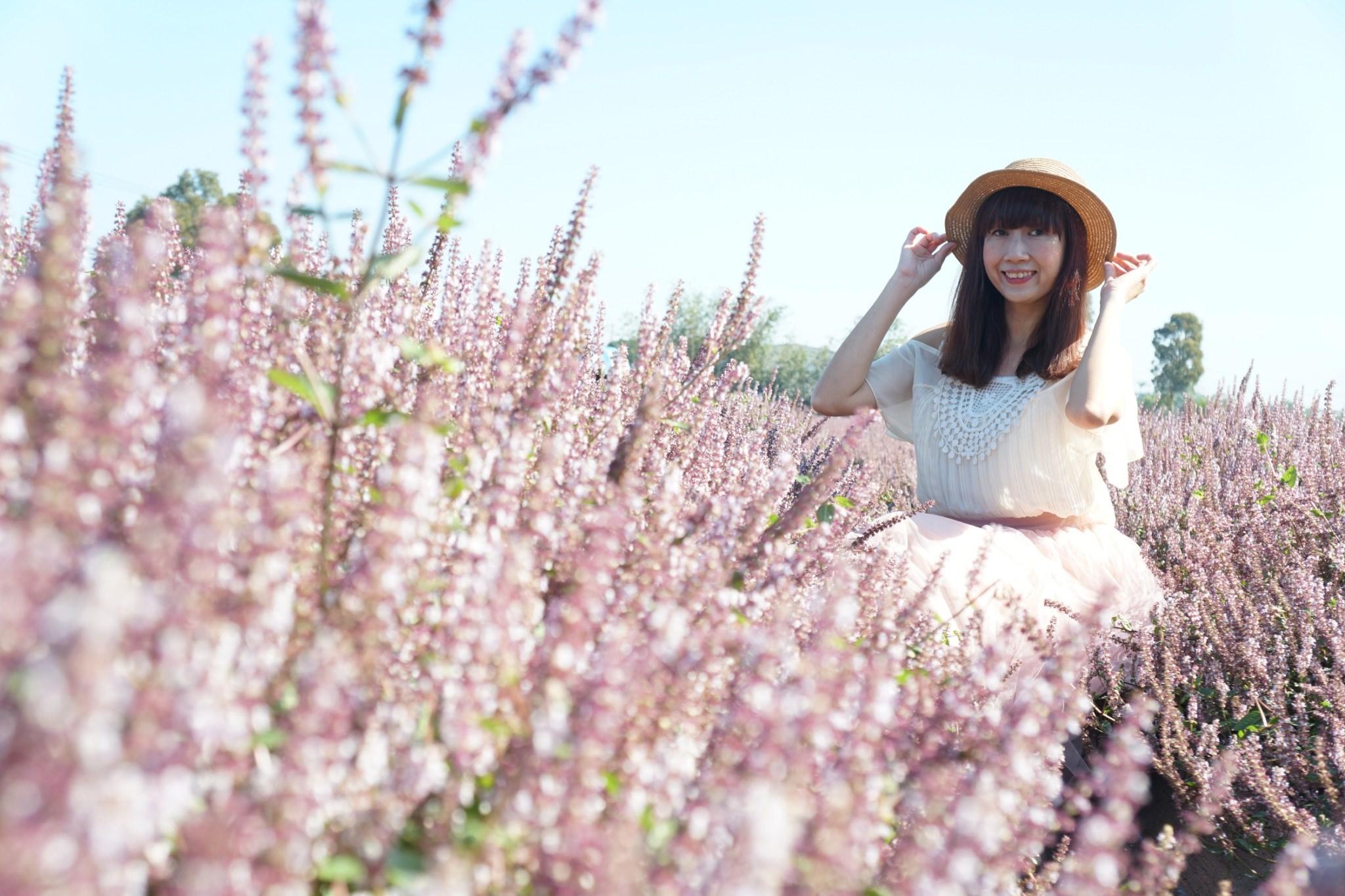 20181203234700 71 - [桃園花彩節]紫色仙草花田夢幻登場  一起拍出日雜感照片