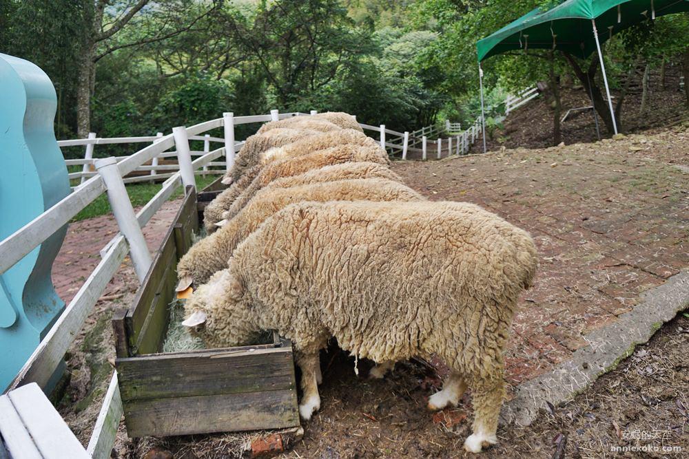 20190421171524 37 - 熱血採訪 [桃園旅遊]綠光森林綿羊牧場 一泊二食 親近羊群擁抱山林 被施了快樂魔法的森林牧場