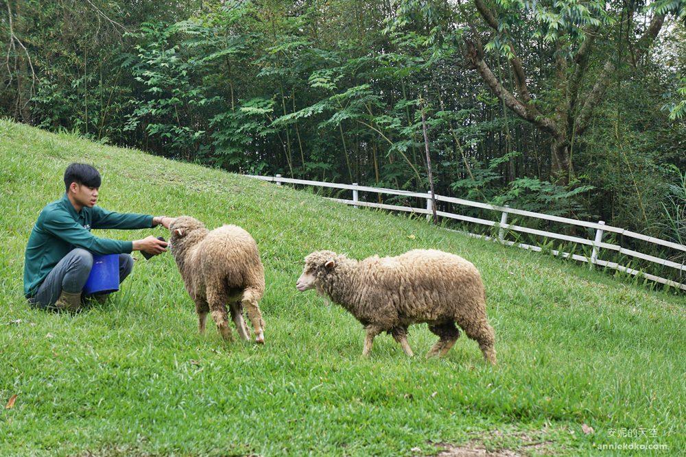 20190421171659 1 - 熱血採訪 [桃園旅遊]綠光森林綿羊牧場 一泊二食 親近羊群擁抱山林 被施了快樂魔法的森林牧場