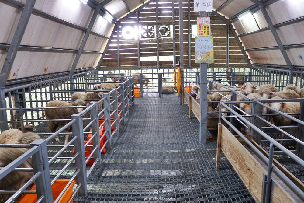 20190422133558 2 - 熱血採訪 [桃園旅遊]綠光森林綿羊牧場 一泊二食 親近羊群擁抱山林 被施了快樂魔法的森林牧場