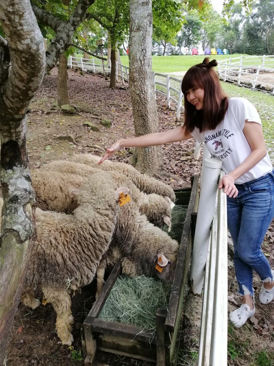 20190422140547 80 - 熱血採訪 [桃園旅遊]綠光森林綿羊牧場 一泊二食 親近羊群擁抱山林 被施了快樂魔法的森林牧場