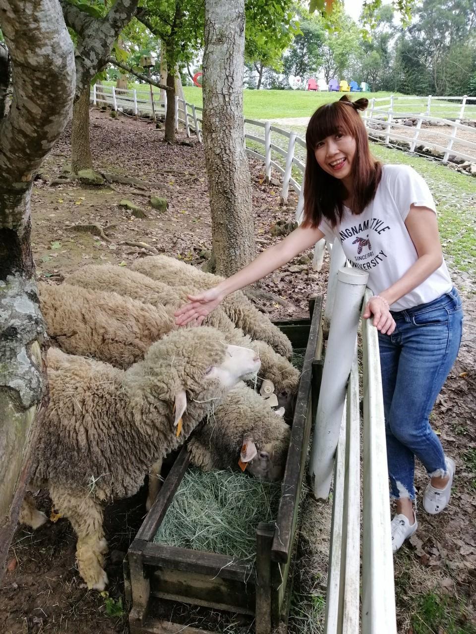 20190422140554 9 - 熱血採訪 [桃園旅遊]綠光森林綿羊牧場 一泊二食 親近羊群擁抱山林 被施了快樂魔法的森林牧場