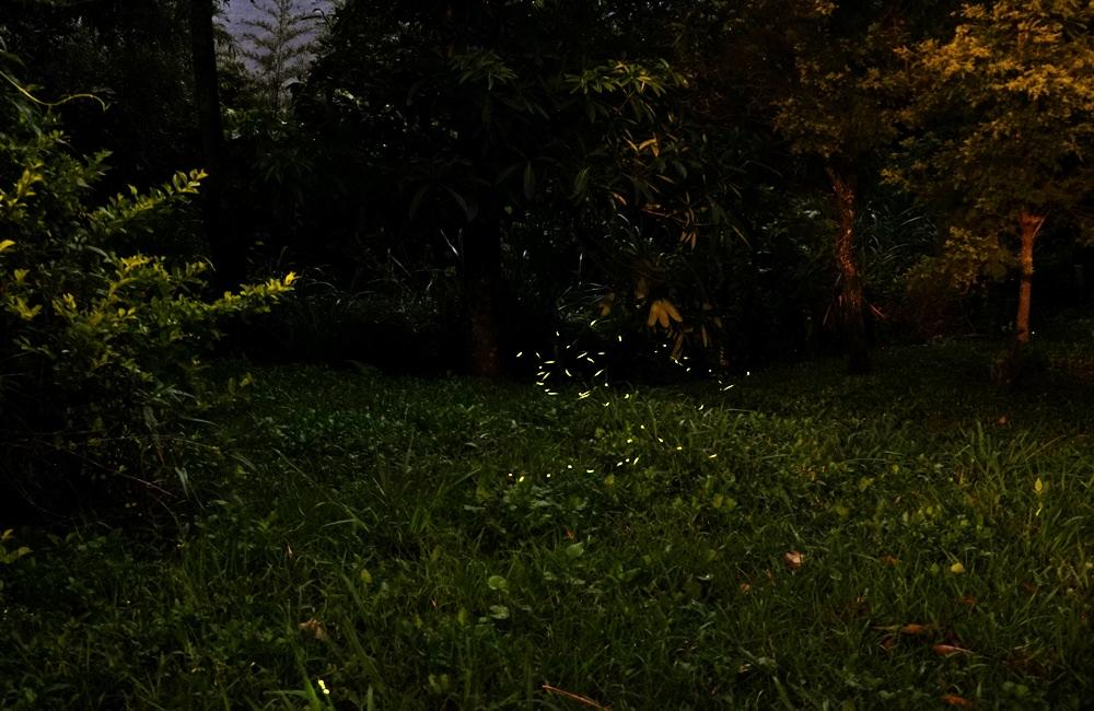 20190422163104 16 - 熱血採訪 [桃園旅遊]綠光森林綿羊牧場 一泊二食 親近羊群擁抱山林 被施了快樂魔法的森林牧場