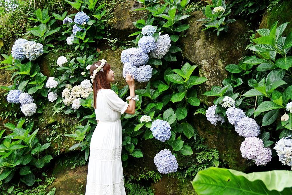 20190613155201 98 - [陽明山竹子湖 午後陽光繡球花田] 與山嵐相伴的紫陽花海 蜿蜒花道巨大花牆 相約來當花仙子吧