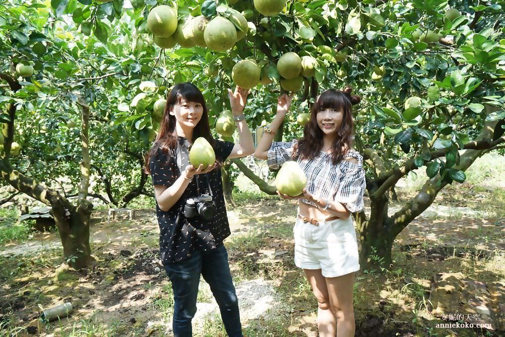 [基隆瑪陵坑旅遊]金明昌農場採柚趣 芳裕農場品味農村佳肴 親子半日遊推薦