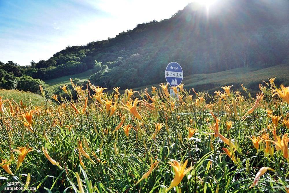 [花蓮玉里 赤柯山金針花海] 屬於這一季的金黃花毯 花東縱谷上的金黃感動