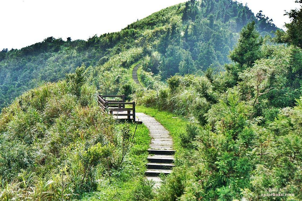 [台北景點 五分山登山步道]  抹茶山系裡的唯美秘境  蜿蜒在山谷的壯闊步道 五分山路線完整攻略 我又征服了一座小百岳