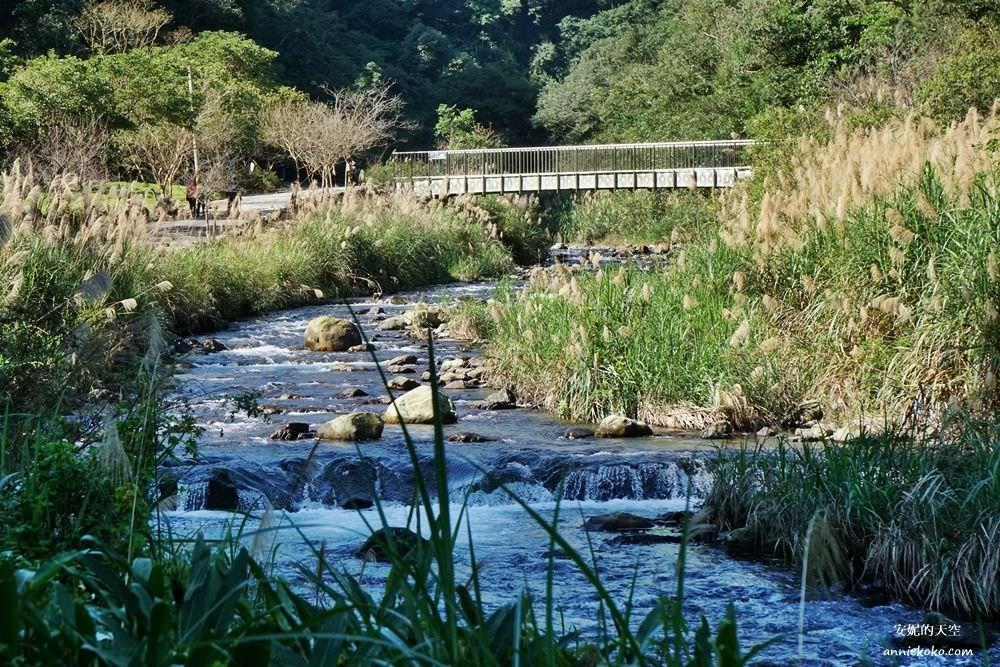 宜蘭北橫森呼吸一日遊|明池森林步道x九寮溪森林系步道之旅