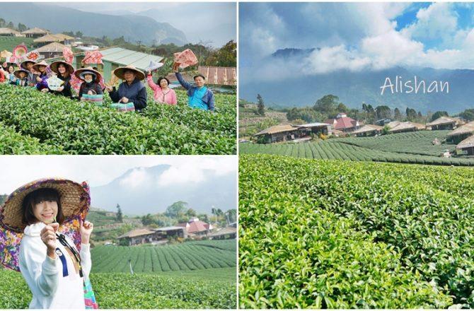 [嘉義 石棹]阿里山國際茶藝學校 來一場山與茶的美麗相遇 最有深度的識茶體驗 林園製茶微笑茶館