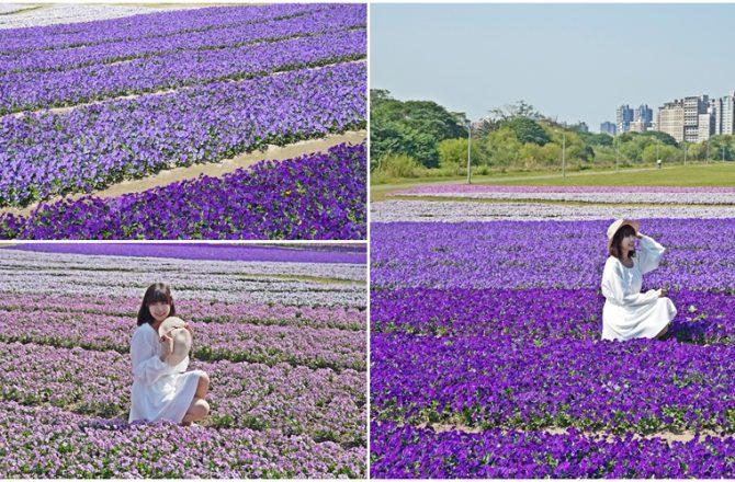 [台北古亭河濱公園紫色漸層花毯] 城市境內紫色花海秘境 我以為我走進普羅旺斯 2021年最新花況