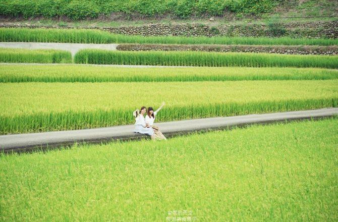[桃園龍潭 三和社區]座落在稻香裡的茶鄉秘境   手作燒窯體驗 療癒系多肉植物 來一壺暖呼呼的和窯好茶