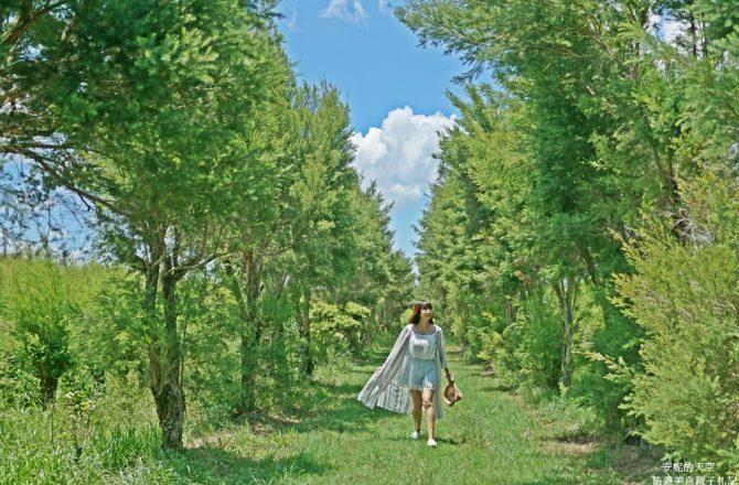 [嘉義大林 艾森農場]被茶樹香氣包圍的夢幻秘境 全台最大澳洲茶樹莊園
