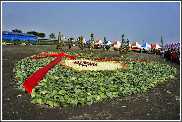 [雲林]土庫子茂拔高麗菜  泡菜DIY  體驗農人採菜趣